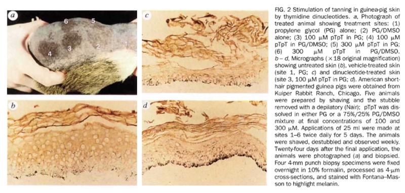 Загар — реакция организма на повреждение ДНК - 3