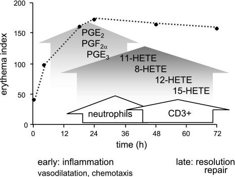 Загар — реакция организма на повреждение ДНК - 6