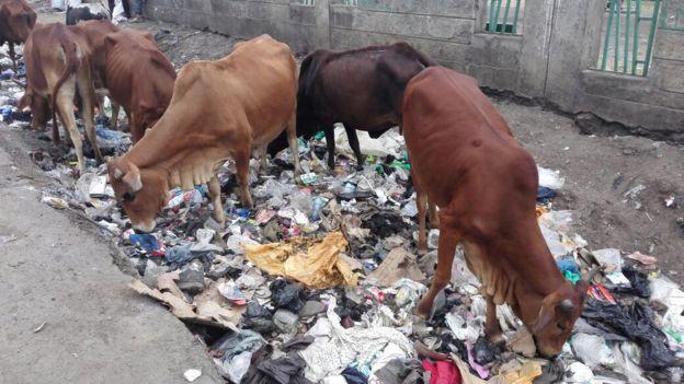 Использование пластиковых пакетов в Кении приравняли к уголовному преступлению - 2