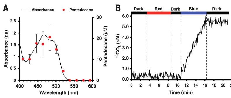 Найден фотофермент, который преобразует жирные кислоты в углеводороды под воздействием света - 2