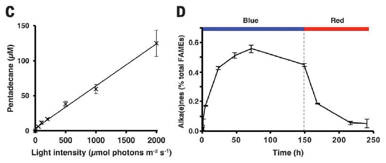 Найден фотофермент, который преобразует жирные кислоты в углеводороды под воздействием света - 3