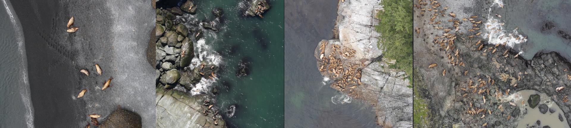 Kaggle: как наши сеточки считали морских львов на Алеутских островах - 7