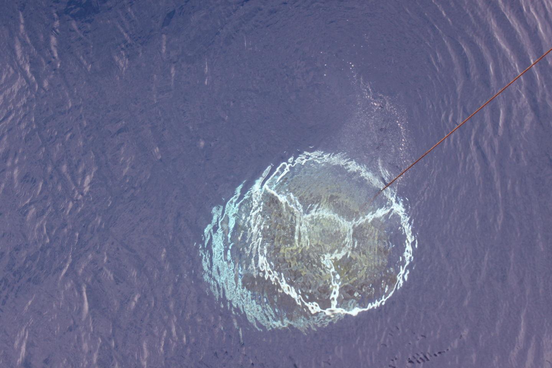 Истории из жизни IT-специалиста на судне, прошедшем вокруг Антарктики - 15