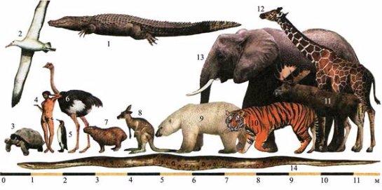 Ученые заявили, что животные средних размеров самые живучие