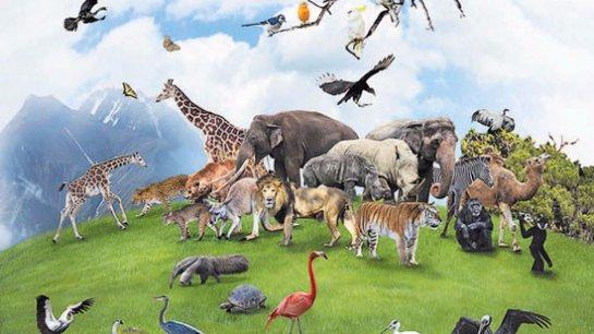 В 2100 году многие виды животных вынуждены будут исчезнуть с планеты