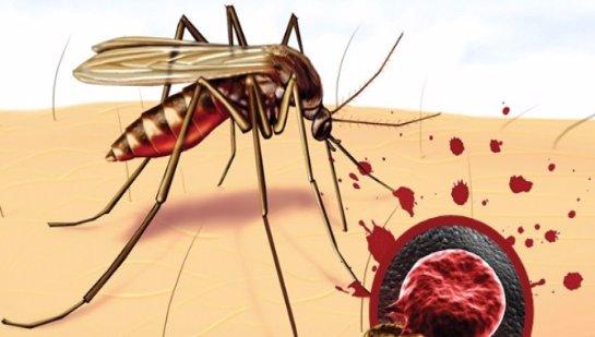 Малярийный штамм мутировал и быстро распространяется
