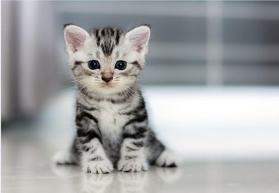 Кот или шеллКод? - 2