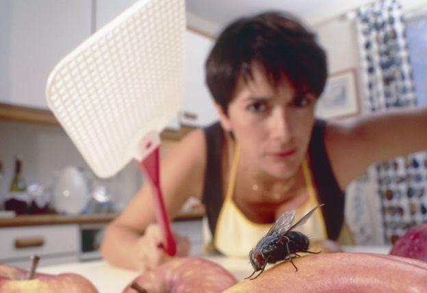 Почему муху так сложно прихлопнуть? - 2