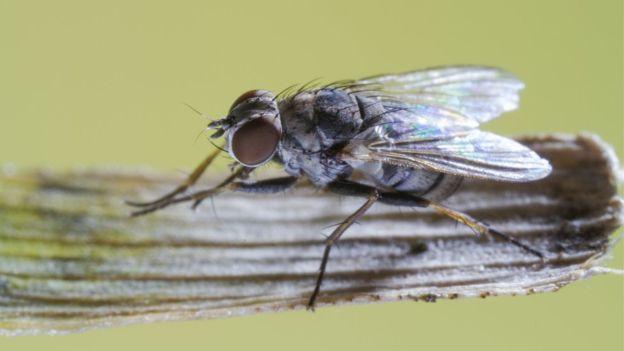 Почему муху так сложно прихлопнуть? - 3