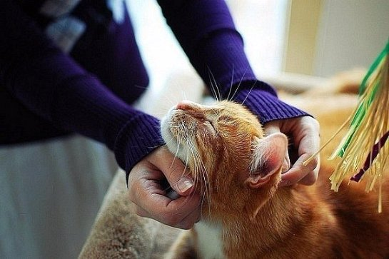 Ученые из Британии начнут использовать котов в качестве пульта для телевизора