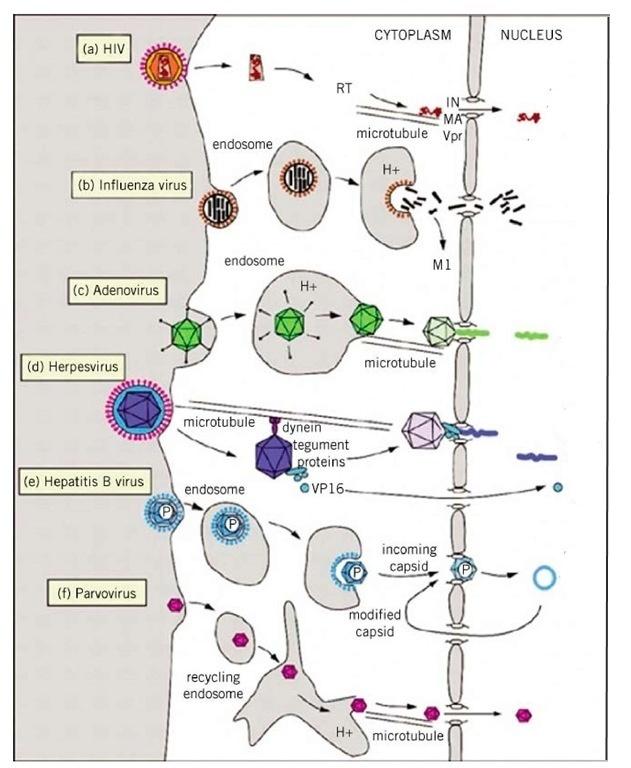 Как победить вирус? Часть 2 - 2