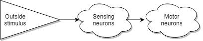 Теоретическая Нейробиология. Часть первая. Основа - 2