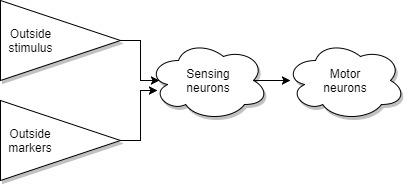 Теоретическая Нейробиология. Часть первая. Основа - 3