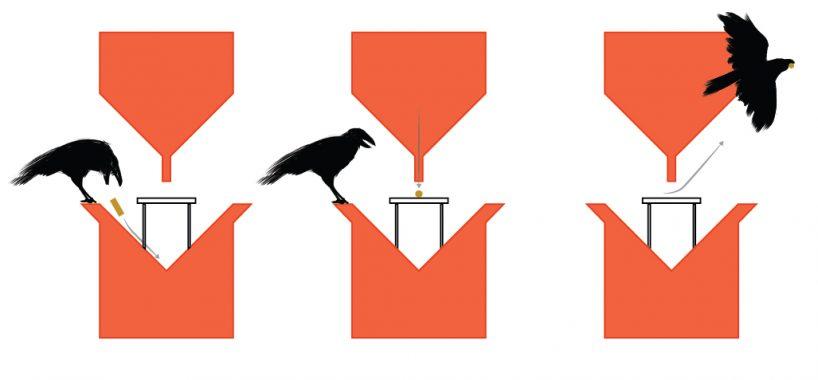 Голландский стартап учит ворон обменивать окурки на еду - 2