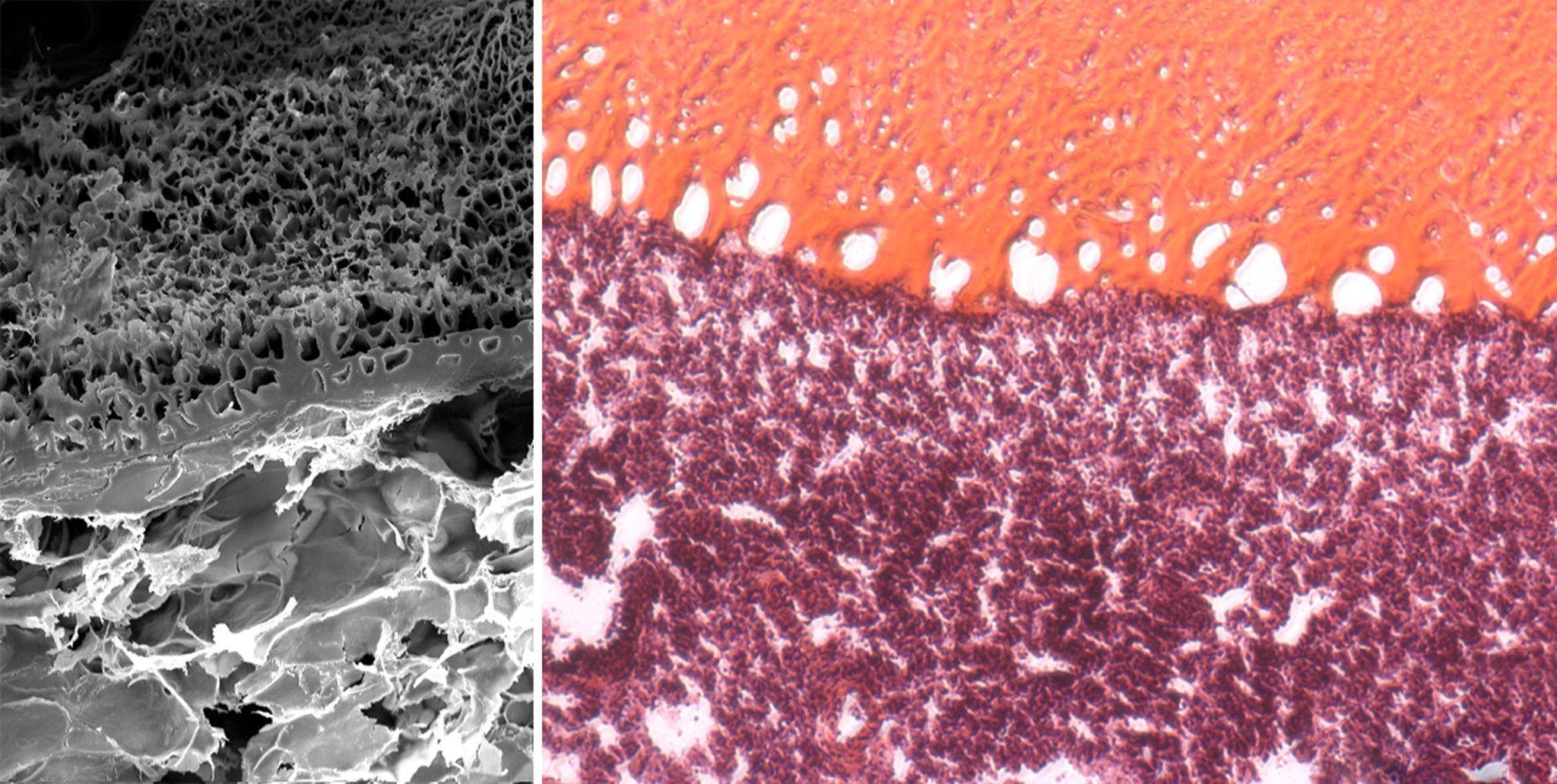 Создан первый биогель-герметик, который заживляет раны без швов - 1
