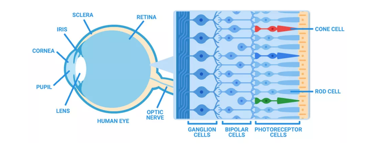 Очки для дальтоников EnChroma, или пост ко Всемирному дню зрения - 3