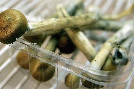 «Волшебные» грибы помогут вылечить депрессию