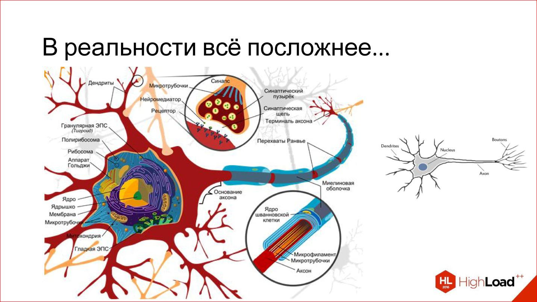 Введение в архитектуры нейронных сетей - 4