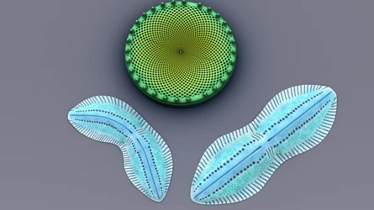 Диатомовые водоросли повышают эффективность органических солнечных элементов