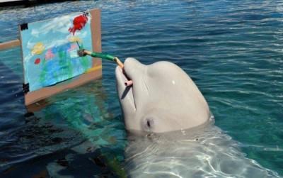 Продвинутый интеллект китов и дельфинов — эволюционная реакция на необходимость жить в обществе - 1