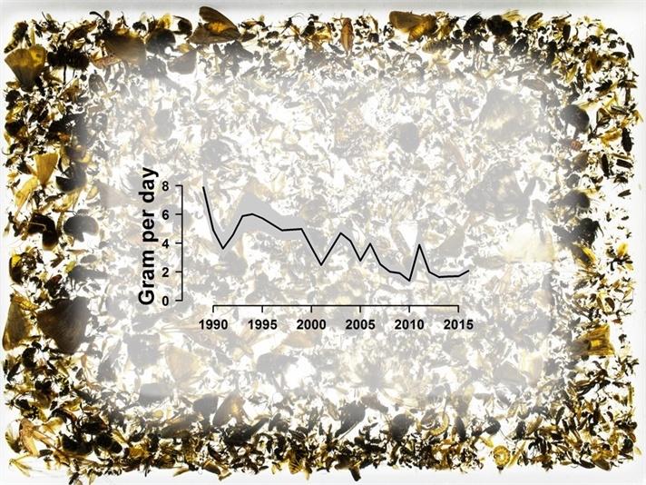 За последние 27 лет биомасса летающих насекомых в Германии снизилась на 76% - 4