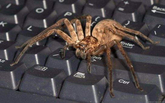 Люди паникуют перед пауками из-за врожденного страха