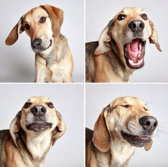 Во время общения с людьми собаки многое выражают мимикой