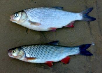 Умные сети для рыбаков: как мы учили смартфоны распознавать рыбу - 10