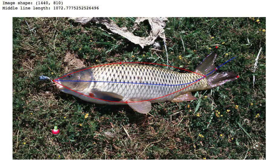 Умные сети для рыбаков: как мы учили смартфоны распознавать рыбу - 16
