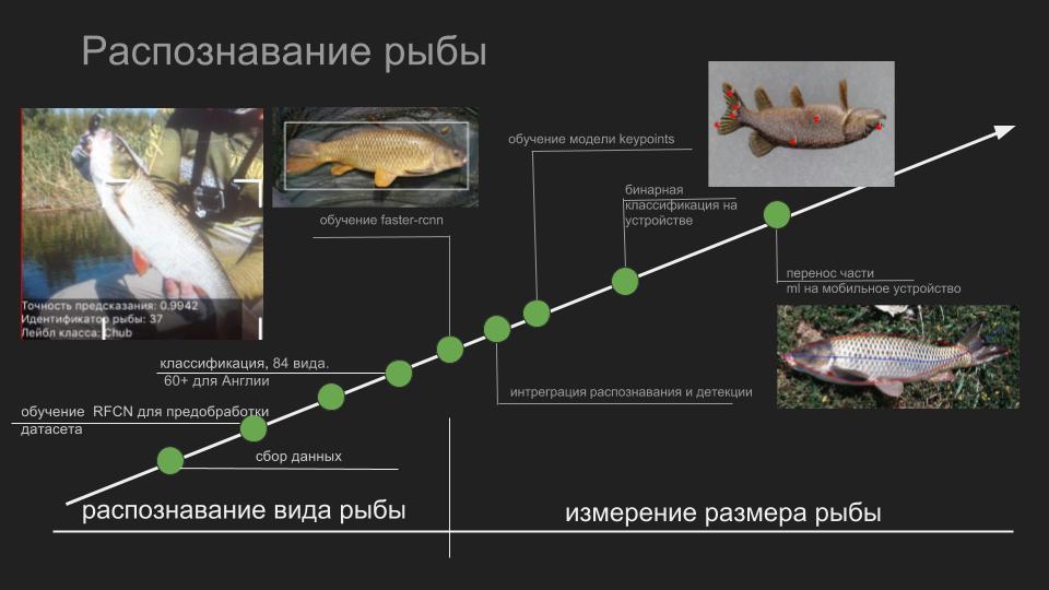 Умные сети для рыбаков: как мы учили смартфоны распознавать рыбу - 2