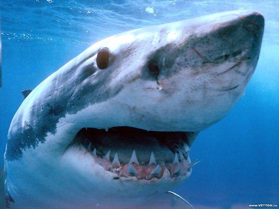 Возле Калифорнии были обнаружены акулы, которым выели мозг