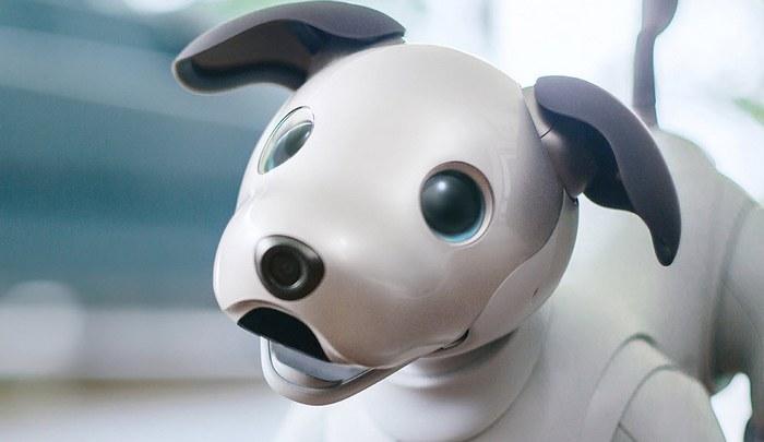 Sony показала нового робота Aibo, который оценен в $1740