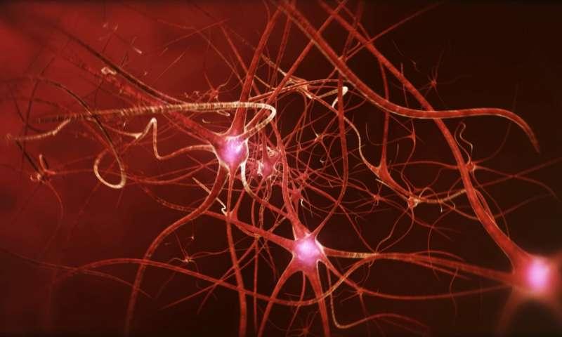 Недосыпание приводит к нарушению связей между клетками мозга - 1