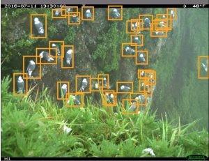 Обнаружение птиц с помощью Azure ML Workbench - 18