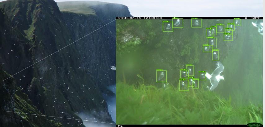 Обнаружение птиц с помощью Azure ML Workbench - 2