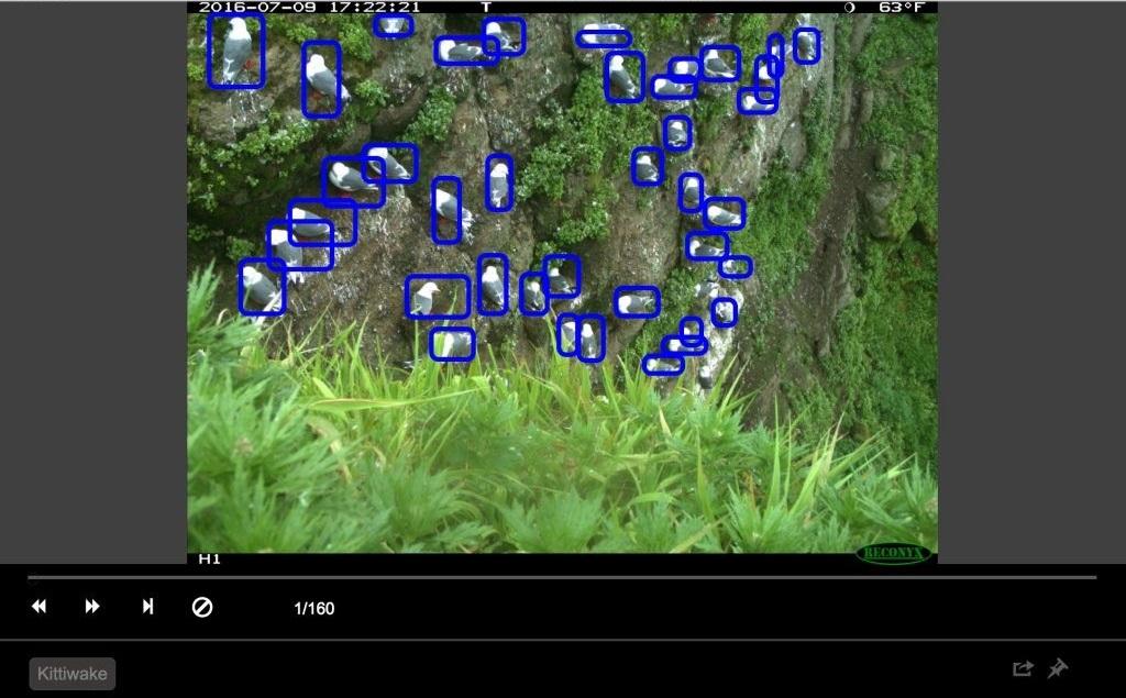 Обнаружение птиц с помощью Azure ML Workbench - 6