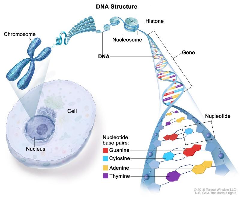 Штурм и натиск генной терапии старения - 3