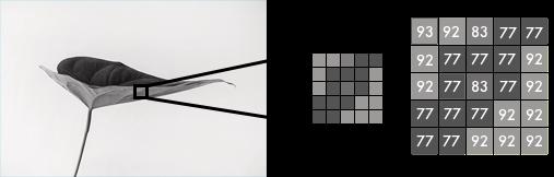 Раскрашиваем чёрно-белую фотографию с помощью нейросети из 100 строк кода - 3