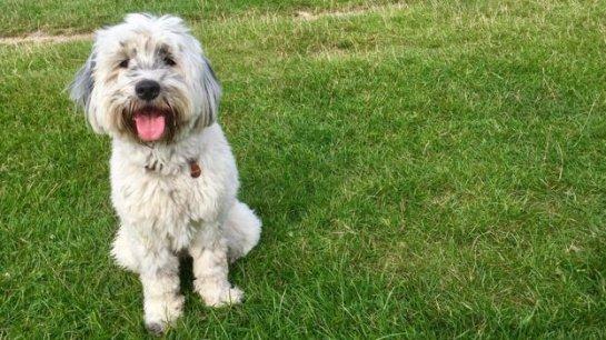 Владельцы собак имеют низкий риск смерти от сердечно-сосудистых заболеваний