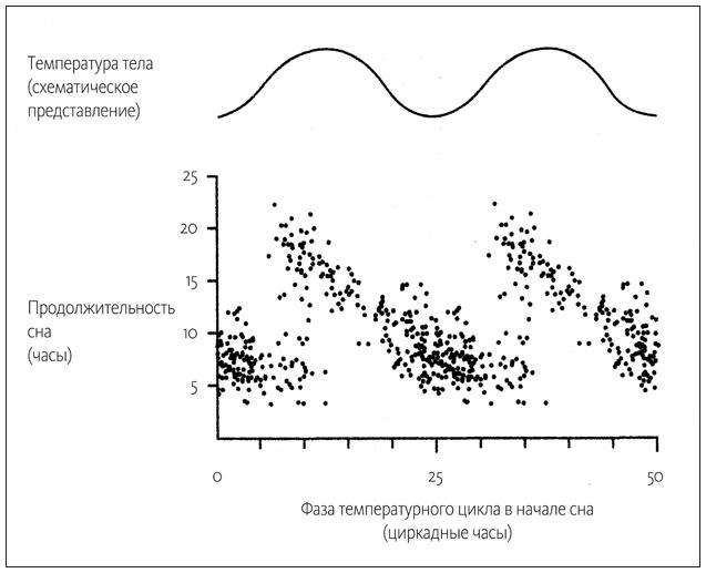 «Флюгегехаймен» или изучение циркадных ритмов через терморектальное зондирование - 4