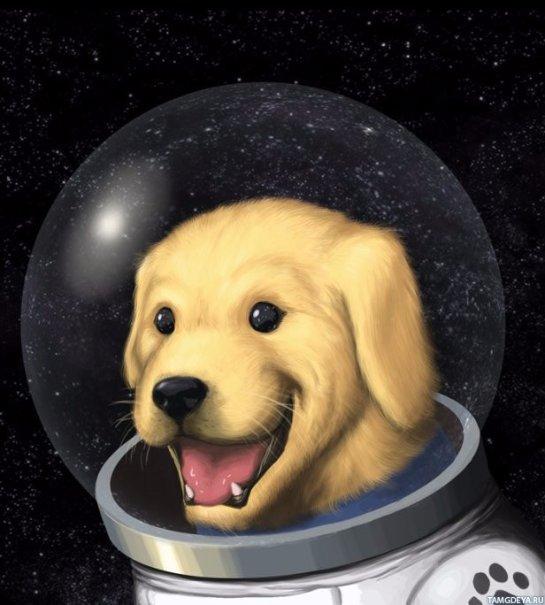 Ученые считают, что собаки не смогут выжить на Марсе
