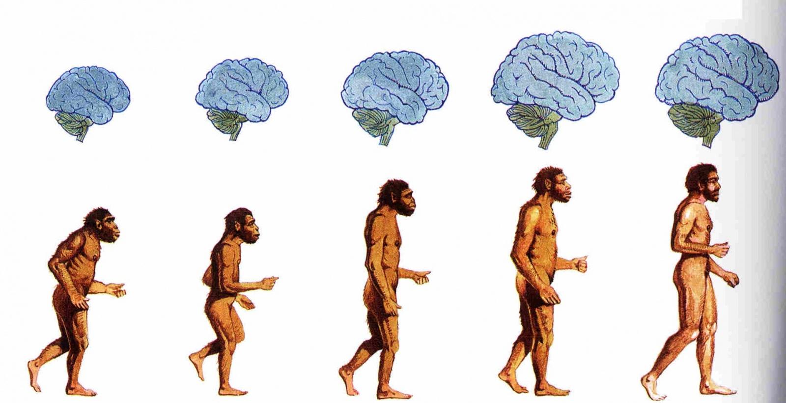 Человеческое сознание. Перенести нельзя скопировать? - 2