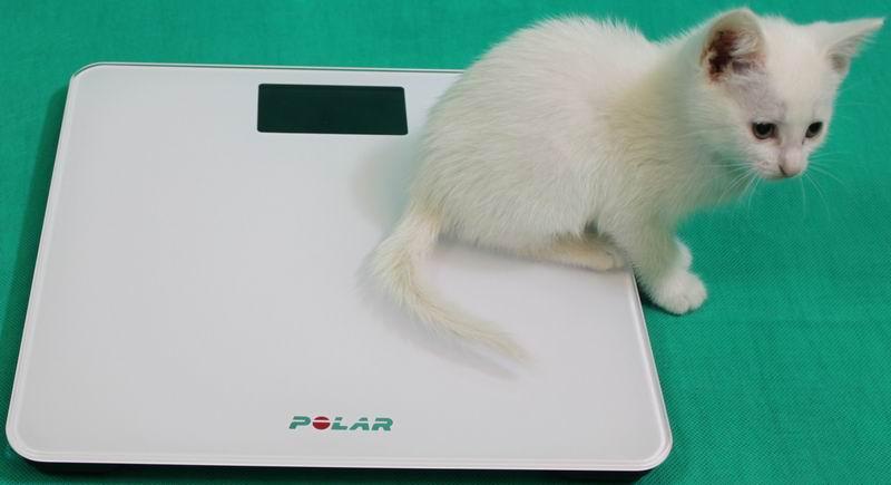 Сравнительный обзор весов. Личный опыт и тесты на себе - 2