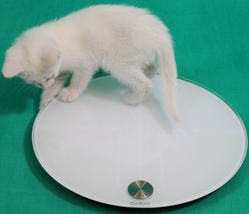 Сравнительный обзор весов. Личный опыт и тесты на себе - 22