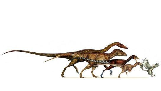Ученые рассказали, чем птицы и динозавры похожи