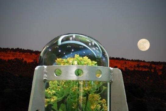 Китайские специалисты завезут на Луну насекомых и растения