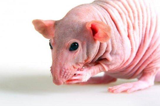 Ученые рассказали о животных, которые всегда молоды