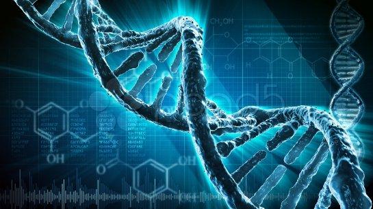 Организм человека изначально настроен на мутации