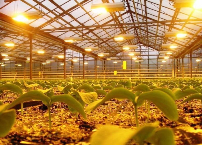 Освещение растений белыми светодиодами — проверочная работа - 8