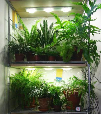Освещение растений белыми светодиодами — проверочная работа - 9